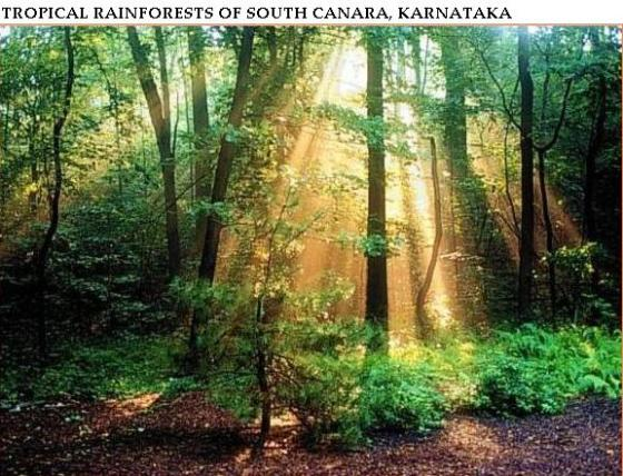 Sun light on forests affected by rain